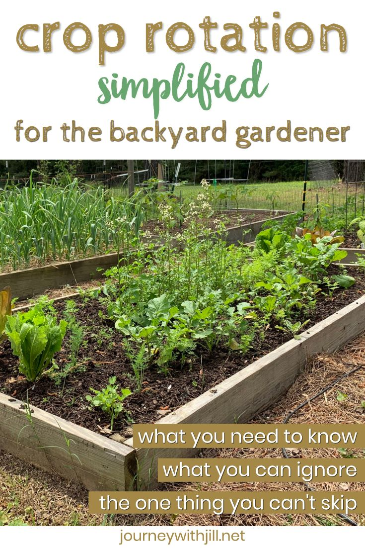 Crop Rotation For Home Vegetable Gardeners The Beginner S Garden Crop Rotation Garden Care Small City Garden Backyard garden crop rotation