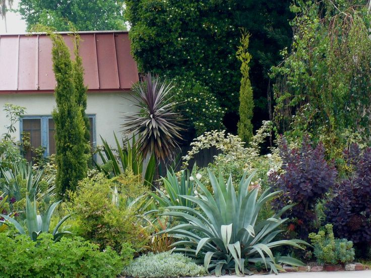 aloes, agaves, yuccas make great counterpoint to softer vegetation