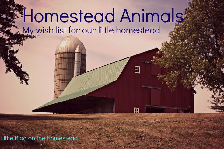 Homestead animals are an important part of any homestead or farm and a
