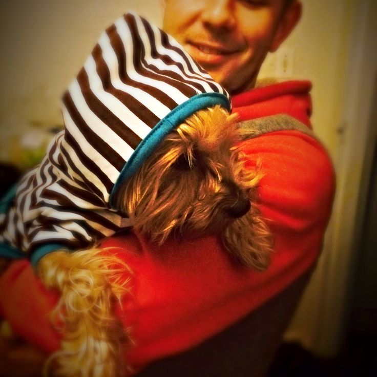 King #yorkie Levi is getting ready for the big #CapeTown #freeze - come #rain or #snow! #myPet #myDog #doggie #woof