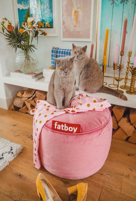Grijze Zitzak Fatboy.Pin Van Fatboy The Original Op Animal Lovers Poef