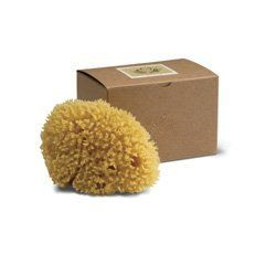 Baudelaire Genuine Caribbean Wool Sea Sponge by Baudelaire. Save 10 Off!. $18.00. Wool Sea Sponge. Ideal for Gentle Body Washes. All Natural. Sea Sponge. 5.5 Inches. The traditional top-of-the-line soft bath sponge, these soft and luxurious premium wool sea sponges are more absorbent and durable than synthetic sponges and are an excellent choice for the bathing of adults. By far the most popular natural bath sponge, the wool sponge is the softest and most absorbent of the sea sponges wit...