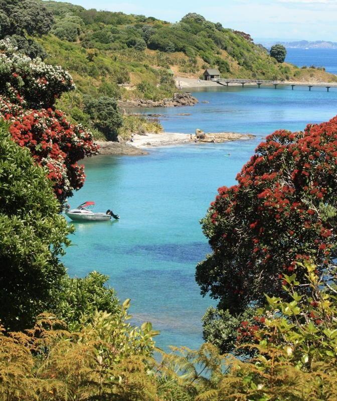 Tiritiri Matangi Open Sanctuary, Hauraki Gulf, Auckland, N.Z.