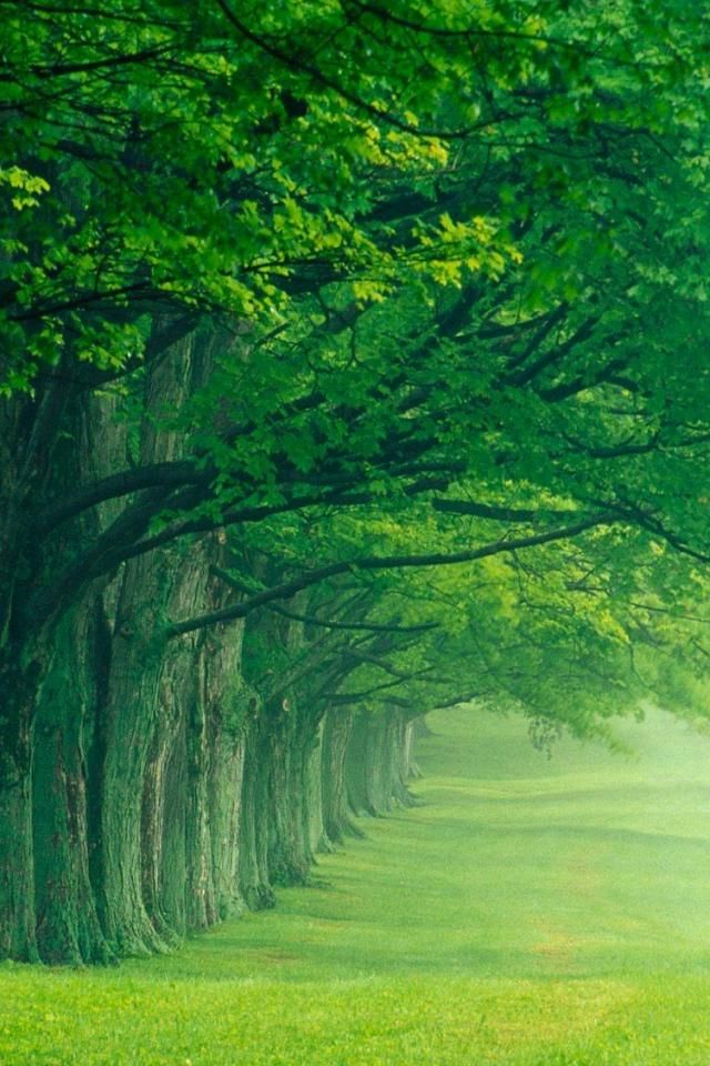 Green Nature Wallpapers HD Pictures One Wallpaper