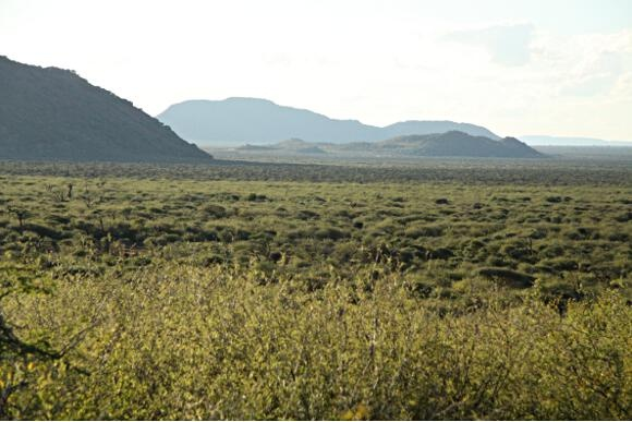 Wide open plains of Madikwe ...