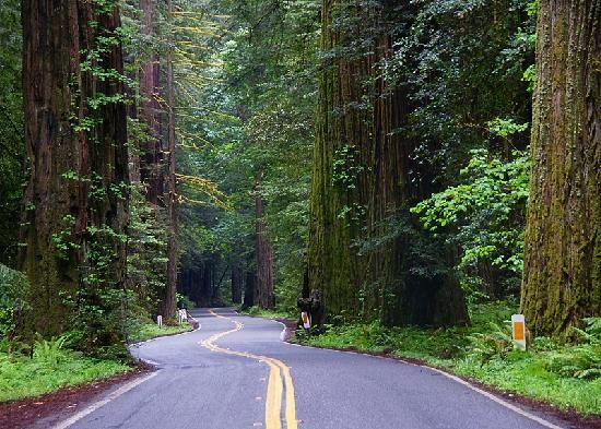 Avenue of the Giants, California: See 511 reviews, articles, and 354 photos of Avenue of the Giants, ranked No.42 on TripAdvisor among 7,238 attractions in California.