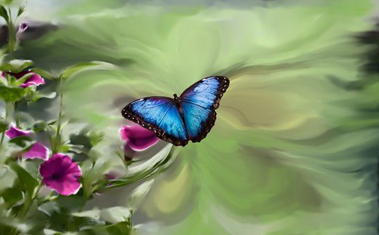 Blauwe Vlinder, Petunia