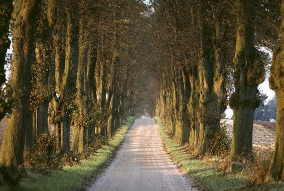 Tree lined road, Denmark, a fine art photographic print by renowned photographer David Ryan on Etsy ($30)