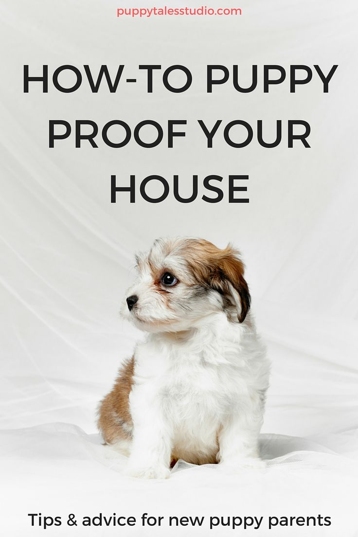 What you should know, before you bring your puppy home!  Today is the day! You can finally bring your new puppy home. But for first-time puppy parents, it can be a little bit overwhelming. Here are some great tips on how to puppy proof your house and get you off to a running start! Tips and advice for new puppy parents! Click to read more or repin and save for later!