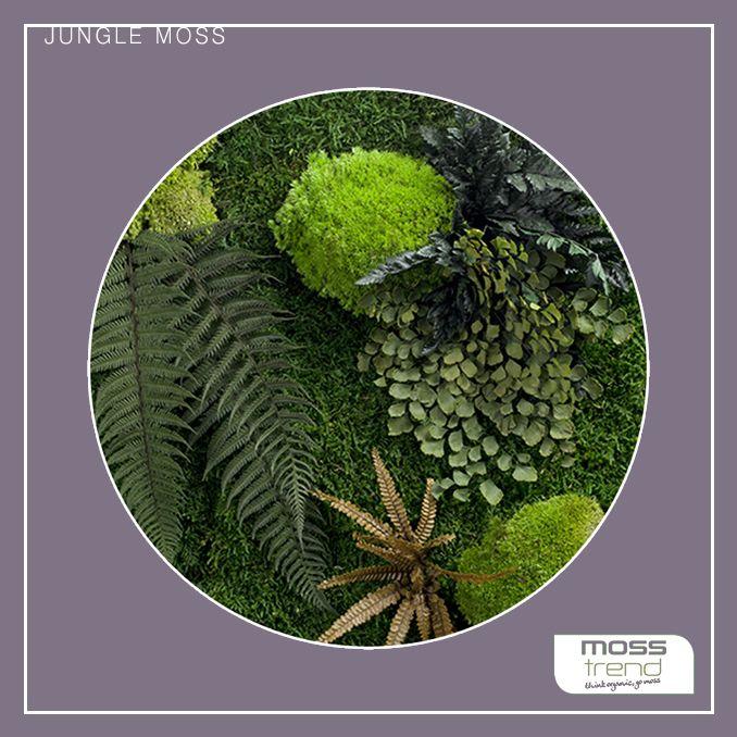 Zielone #ściany JUNGLE MOSS - włoskiej marki MOSS TREND. Dostępny w BandIt Design. www.banditdesign.pl  #mech #zieloneściany