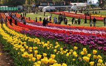 Tesselaar Tulip Festival 2014 - Melbourne :: Close to Melbourne, in the hills of Silvan, just through the fairytale Mt Dandenong forest. Sept 11-Oct 7