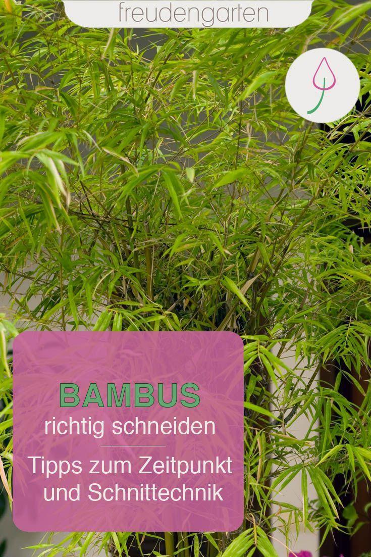 Bambus Richtig Kurzen Schneiden Formen In 2020 Sichtschutz Garten Bambus Bambus Garten Bambus Schneiden