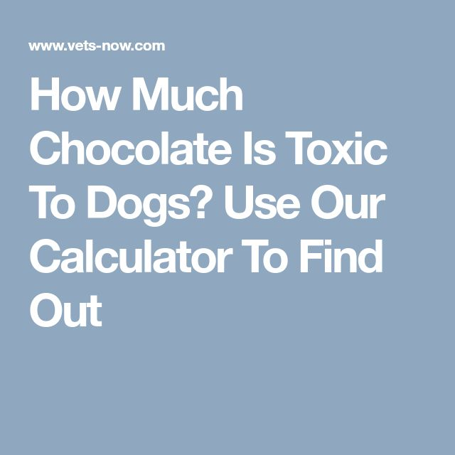 How Much Chocolate Is Toxic To Dogs? Use Our Calculator To Find Out