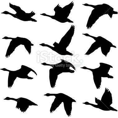 Canadian Geese Silhouettes Royalty Free Stock Vector Art Illustration