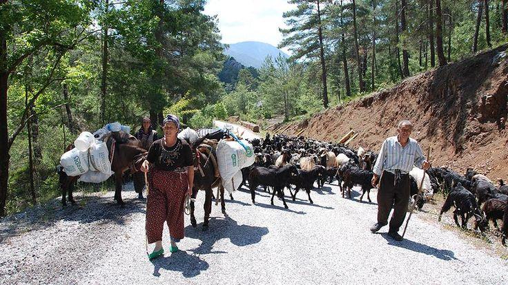 Antalya'da havaların ısınmaya başlamasıyla hayvancılıkla uğraşan Yörüklerin yaylalara göç yolculuğu başladı.