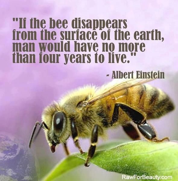 This is a real threat everyone. Bees are dieing out. Whole colonies have disappeared all over the world.  Please use chemicals responsibly.  Natural is better for our environment.