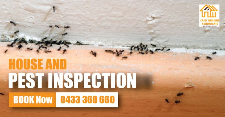 Building And Termite Inspections in Melbourne During our Building and pest inspections, Our qualified building inspector will thoroughly inspect each and every corner of property. #BuildingAndPestInspections #BuildingAndTermiteInspections #HouseInspections #HouseAndPestInspections #BuildingInspector #PrePurchaseBuildingInspections