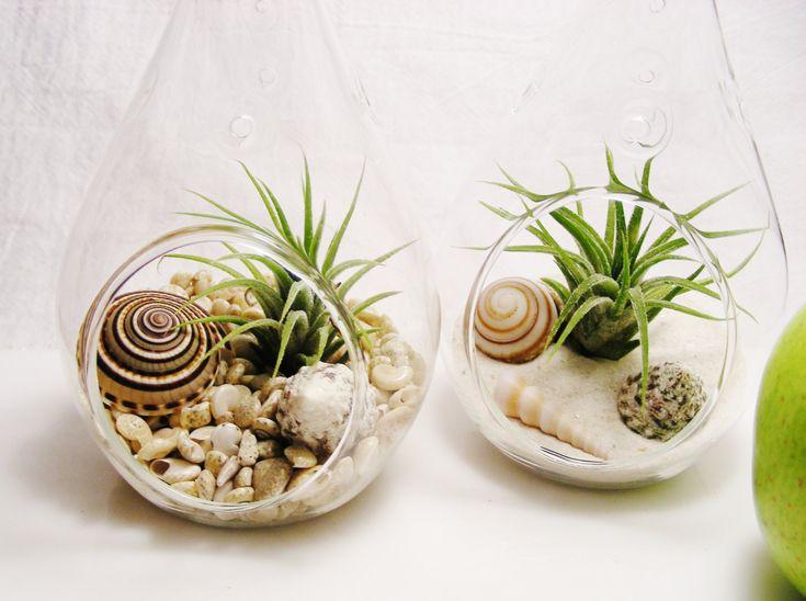 Teardrop Glass Terrarium Kit with Tillandsia Air Plant ~ Choice of Sand or Pearlized Umbonium Shells ~ Gift idea by BeachCottageBoutique on Etsy