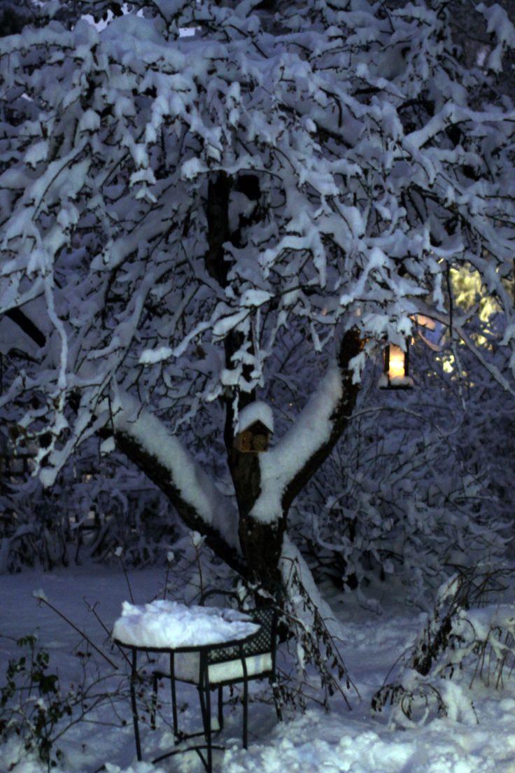 Talvinen omenapuu / Apple tree in the winter.