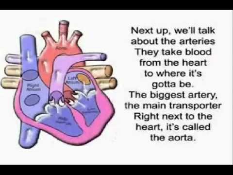 The Circulatory Song