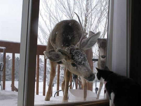 Deer and cat: Cats, The Doors, Sweet, Plays, Things, Photo, New Friends, Deer, Animal
