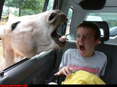 Bizarre Photobombs: Face, Animals, Horse, Funny Stuff, Funnies, Funny Animal, Photo, Kid