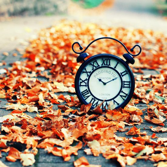 November backyard by bebefromtheblock on DeviantArt