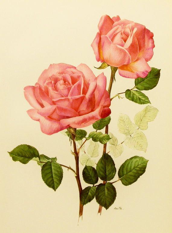 Botanical 1960s Grace De Monaco Silvery Pink Rose Flower