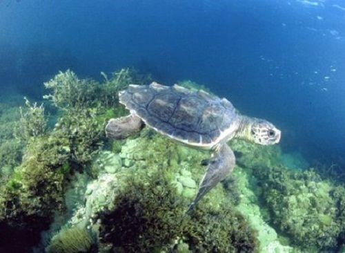 Anche Ferrara partecipa alla Maratona Nazionale Erpetologica con le tartarughe marine