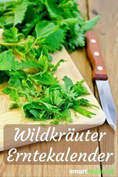Wilde Pflanzen haben meist viel mehr Vitamine, Mineralien und andere Vitalstoffe zu bieten, als Gemüse aus dem Supermarkt. Finde heraus, wie du die Schätze der Natur für deine Gesundheit nutzen kannst. Im Erntekalender für Wildkräuter erhältst du einen guten Überblick, welche Kräuter und Wildfrüchte du finden kannst und wie du sie nutzt.