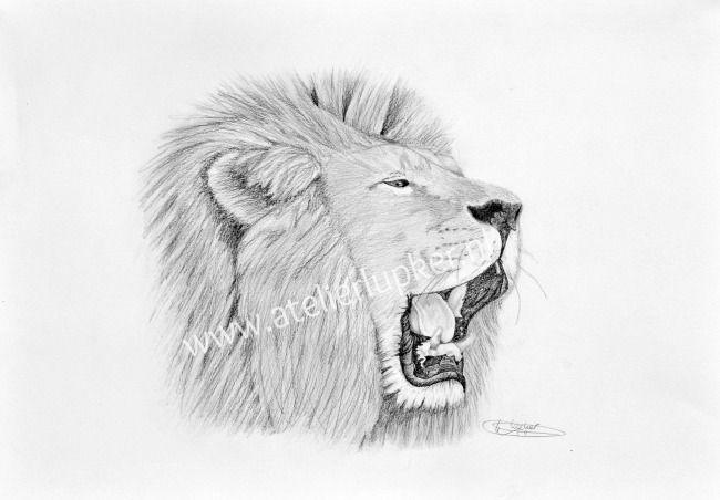 Tekening brullende leeuw