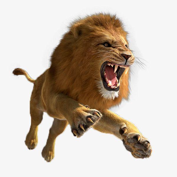 Leaping Lion Lion Images Lion Background Lion Pictures