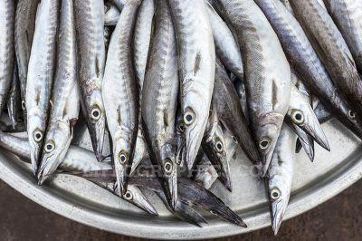 Fish in basket (ribbonfish)