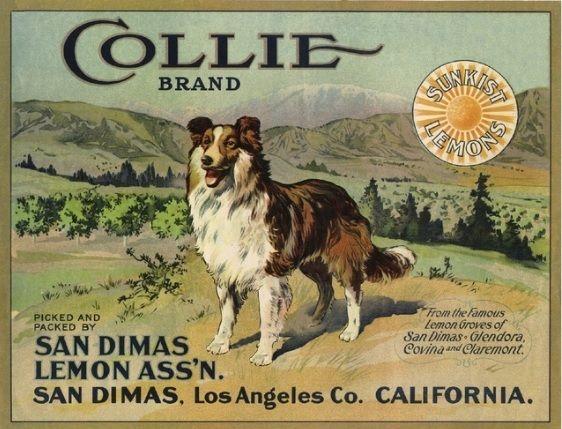 Collie Brand