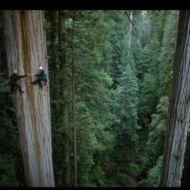 .Photos, Forests, Buckets Lists, Nature, National Geographic, Northern California, Redwood Trees, National Parks, Trees Climbing