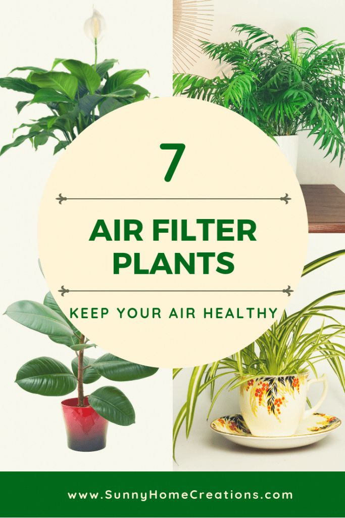 Air filter plants to keep your air healthy. Great…