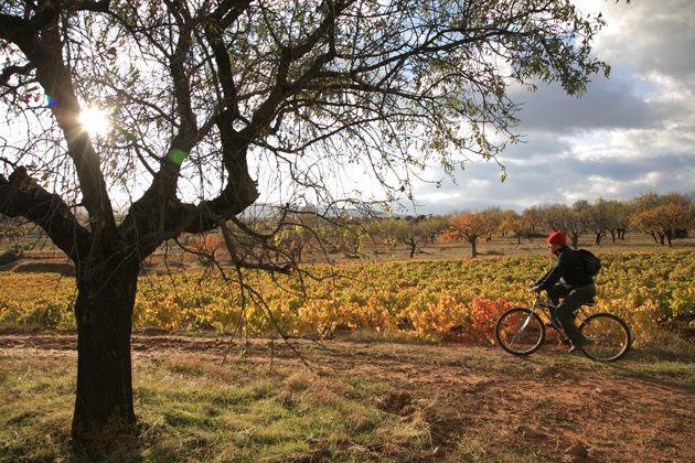 La Rioja entre viñedos