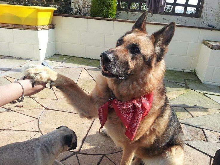 Alli Newns' dog Kye  #PreciousPet of #April #PoM