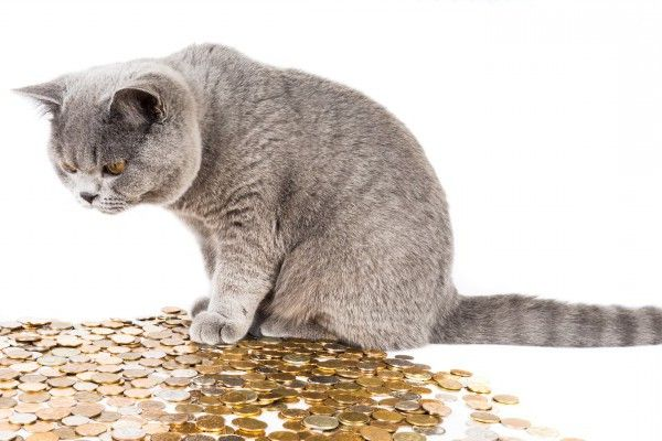 cat with gold