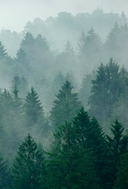 Misty forest. | Via Tumblr user Issac Holden