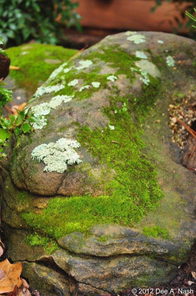 Mossy stone in my front garden. The moss is especially pretty right after a rain. I learned this at the Bloedel Reserve on Bainbridge Island.: Modern Gardens, Interior Design, Pretty Lichen, Garden Design Ideas, Modern Garden Design