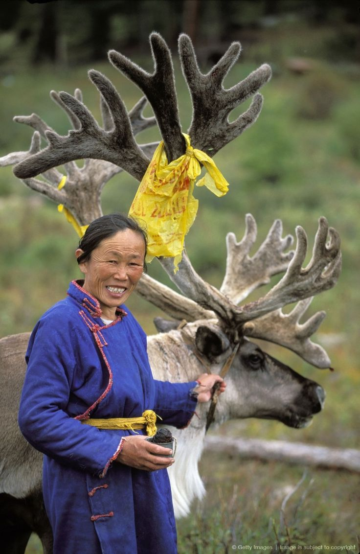 Tsaatan woman and reindeer. Red taiga. Khovsgol province. Mongolia