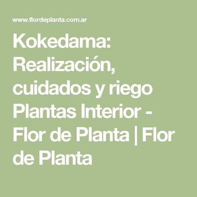 Kokedama: Realización, cuidados y riego Plantas Interior - Flor de Planta | Flor de Planta