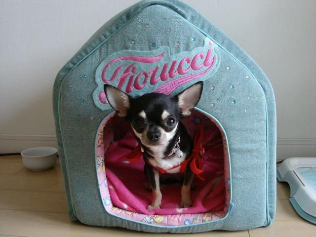 what a little cutie: House Dogs, Cool Dogs House, Dogs Stuff