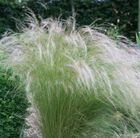 Lovely architectural Grass