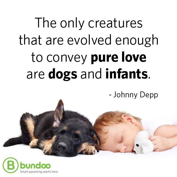 The Only Creatures That Are Evolved Enough To Convey Pure Love Are Dogs And  Infants. Parent QuotesA ...