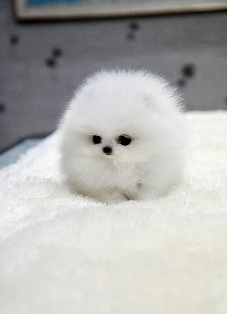 A white soot sprite? Nope! A puuuuuppy.