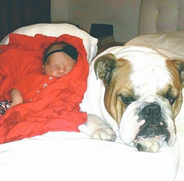 Com apenas quatro dias de vida, a filha de Coco Austin e do rapper Ice T já está conhecendo os outros membros da família, como o buldogue Max