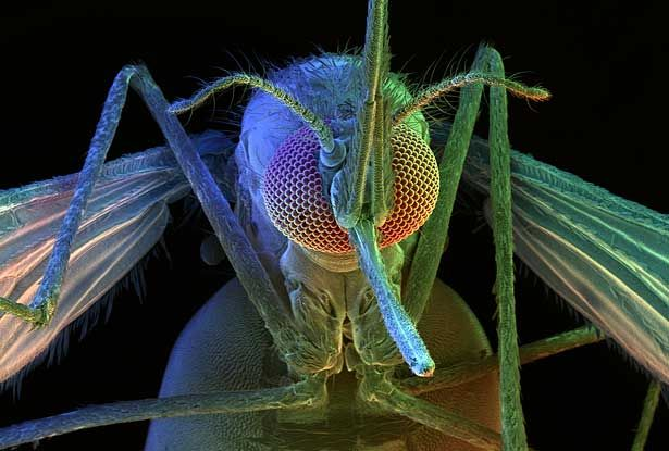 scanning electron microscope images