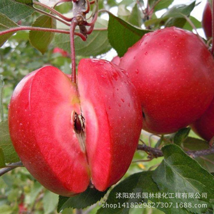 Apple apple rojo amor fruta carne roja, la fruta en conserva árboles se pueden plantar árboles frutales 50 Semillas/Paquete